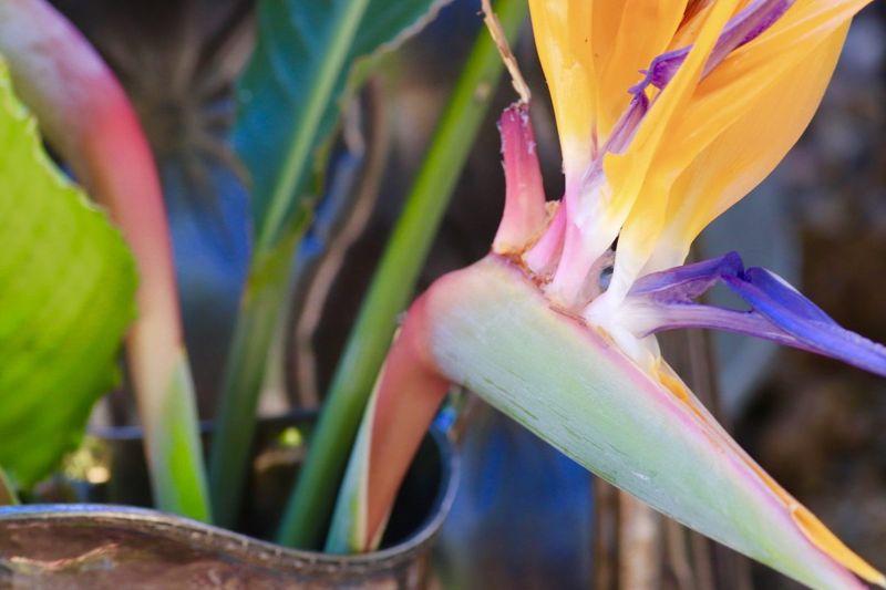 freezes damage cover plants