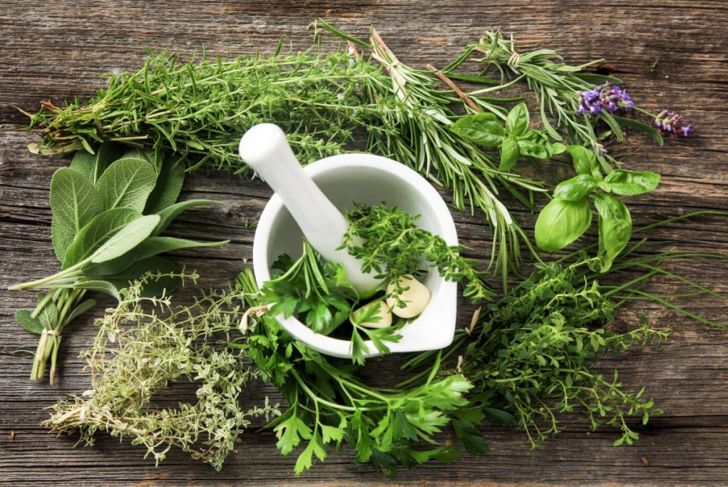 edible plants herbs