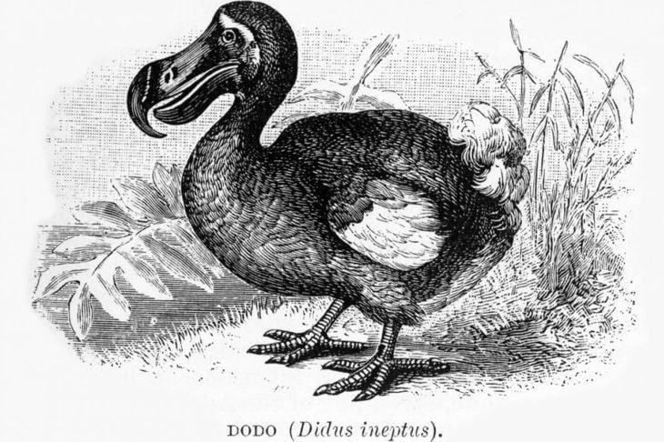 dodo extinct