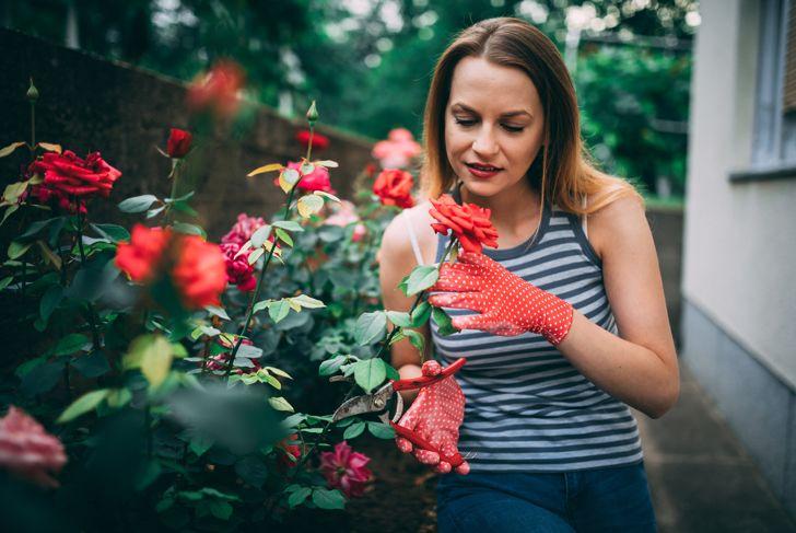 Beautiful woman cutting flowers in the backyard