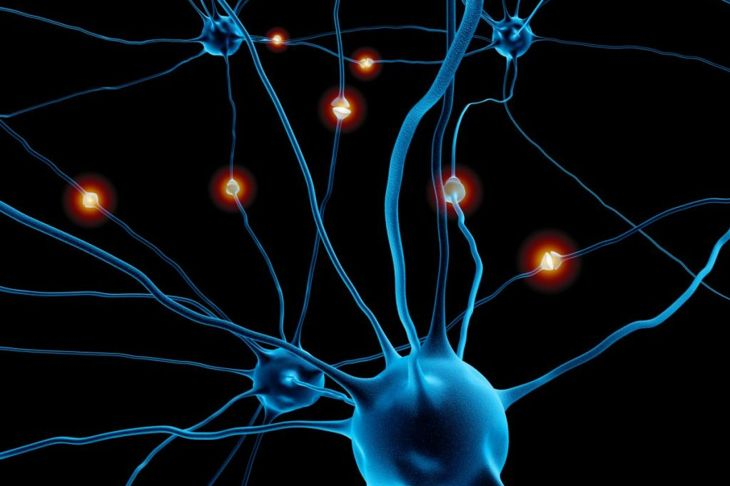 neurons habit