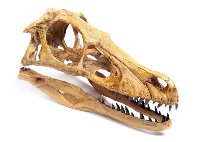all about velociraptors