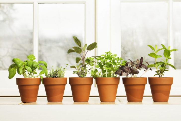 indoor pots soak overnight drainage