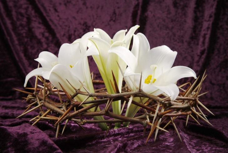 lillies in crown of thorns