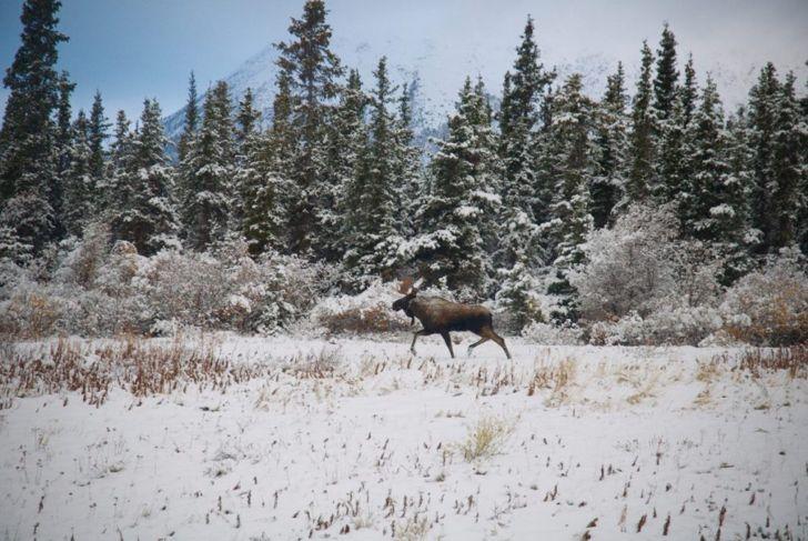 Yukon Territory in winter