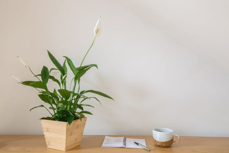 Peace lily house plant with coffee and notepad and pen