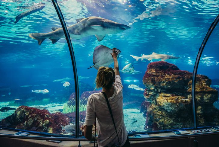 Woman looks at shark in Barcelona Aquarium