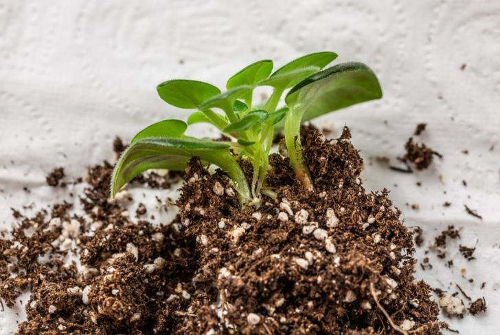 peat vermiculite soil