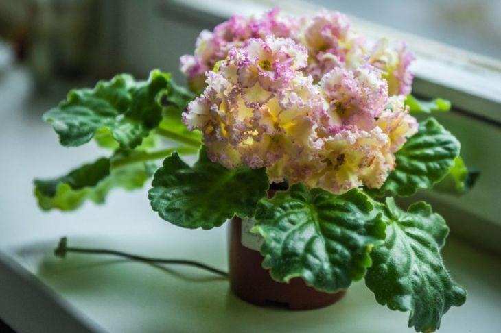 light beautiful blooms