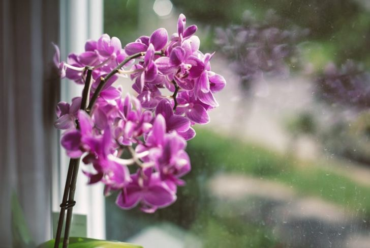 pruning stem moth orchid
