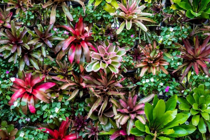 Caring-for-bromeliads