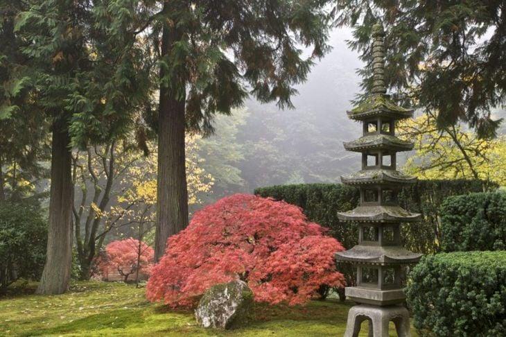 Tree in a Japanese garden.
