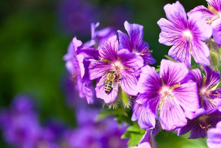 care water fertilizer hibiscus