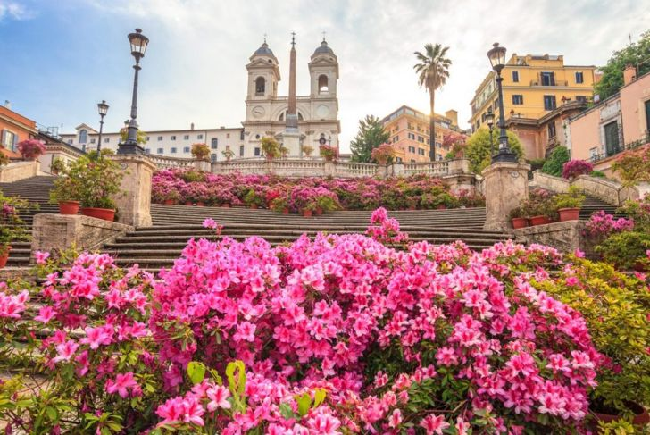 Rhododendrons in Italy.