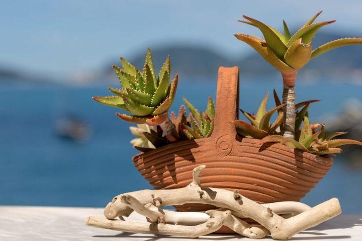 terra cotta clay planter aloe