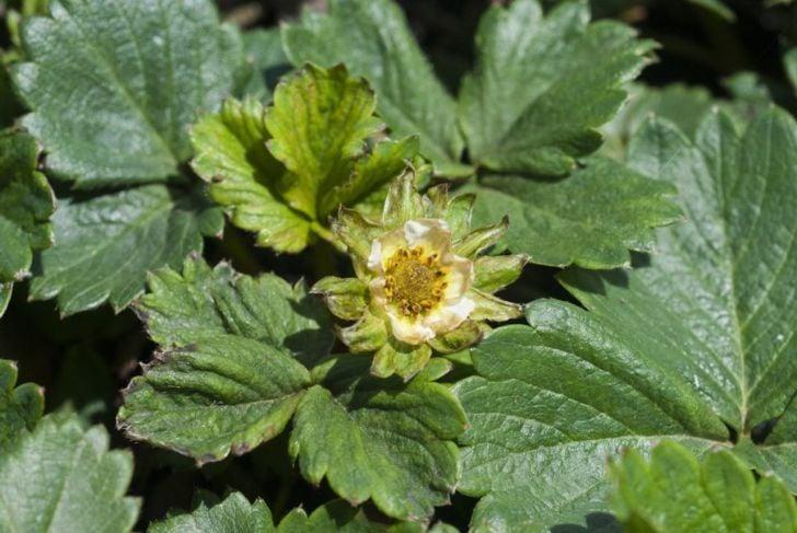 treating plant pests