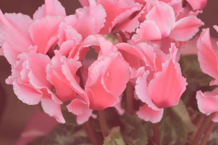 fertilize when blooming
