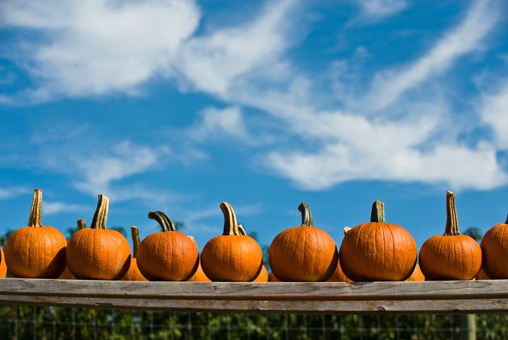 USA, New York State, East Hamptons, Pumpkins on board