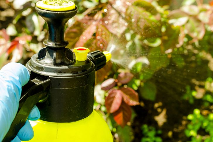 Pesticide treatment of garden flowers, trees and plants.