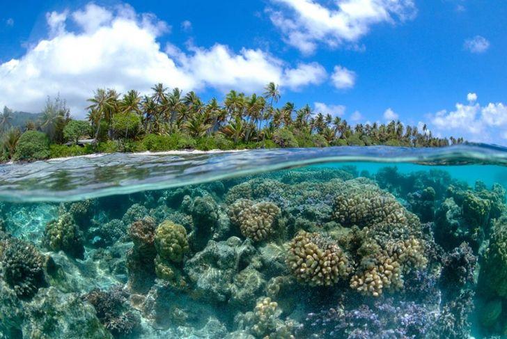 french polynesia reef