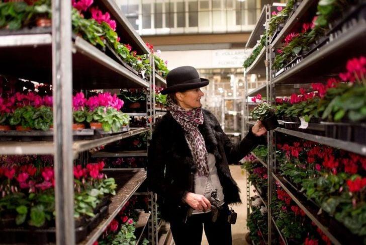 tropical, hardy, cyclamen, florist, nursery