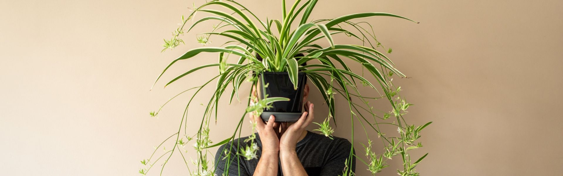 Why You Should Have Spider Plants at Home