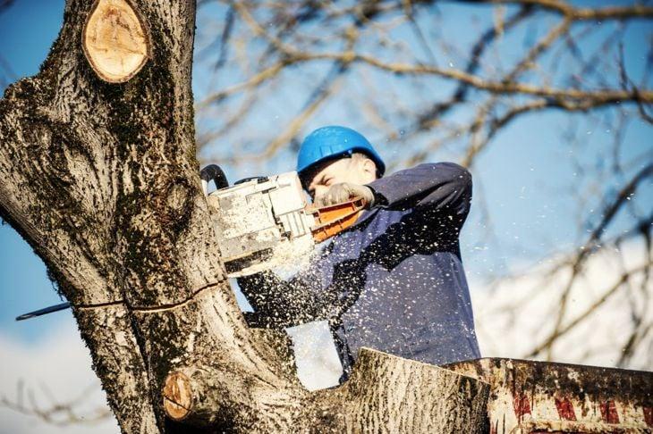 pruning trimming tree arborist