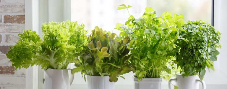 How to Grow Your Own Fresh Herbs