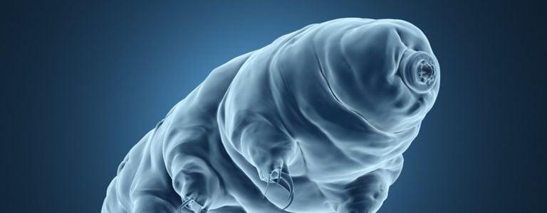 What are Tardigrades?