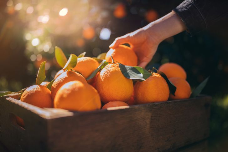 Close-up of farmer's hand taking fresh orange from wooden basket with ripe harvest in grove