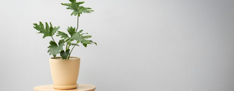 Houseplants You Can't Kill by Overwatering