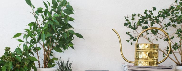 Air-Purifying Plants Aren't a Complete Myth