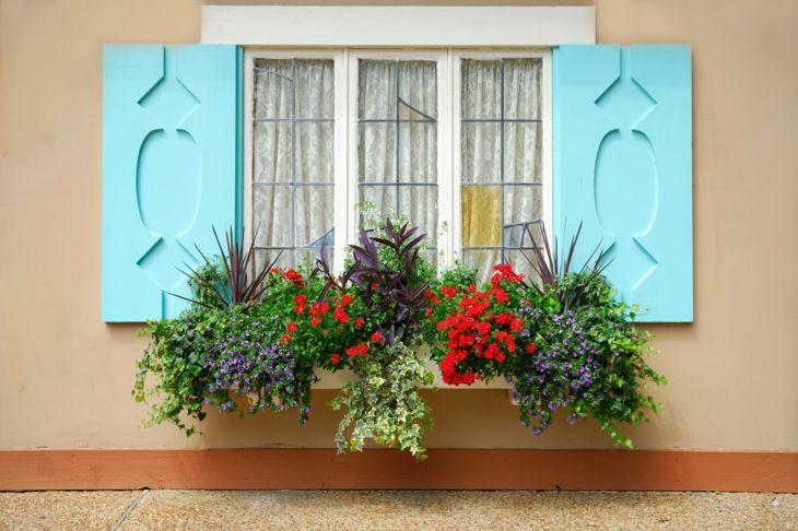 garden landscape flower window box