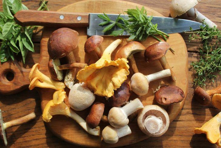 Mushroom harvest time.