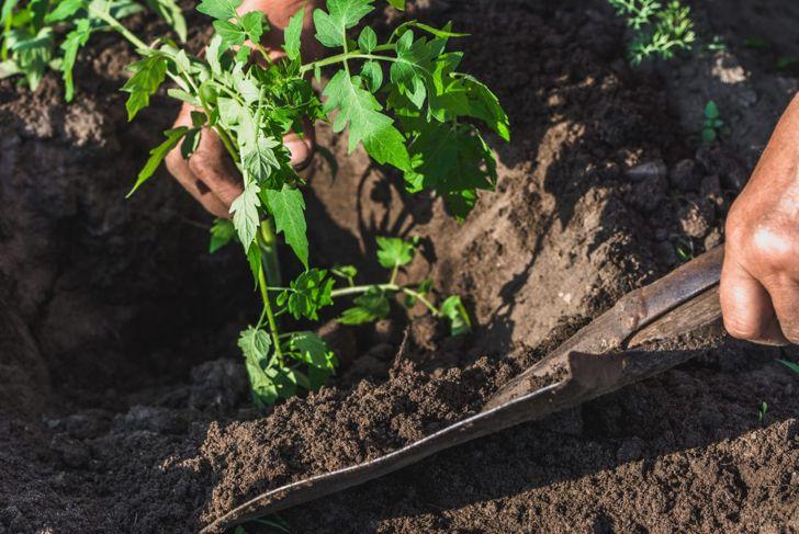 hole planting stem soil