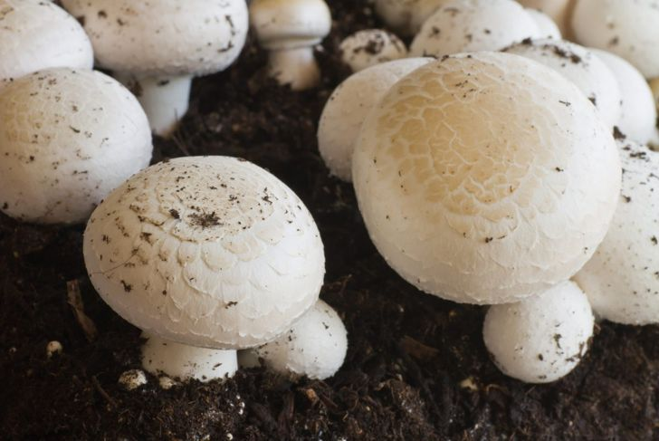 Keep the temperature regulated to encourage fruiting.