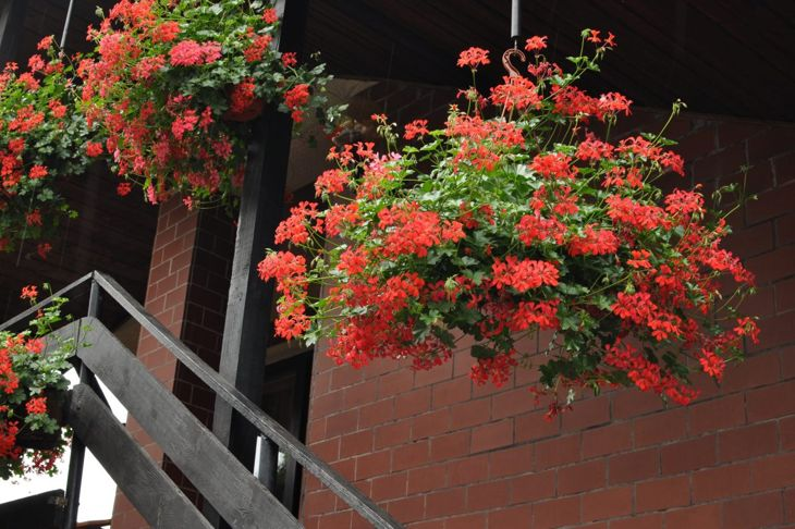 Hanging Garden Balcony Over Downstairs