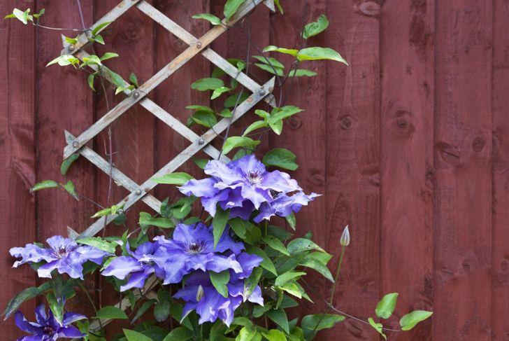 Gardening Trellis Space Saving DIY