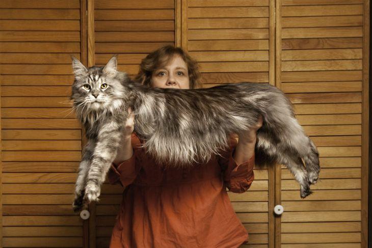 Longest domestic cat ever