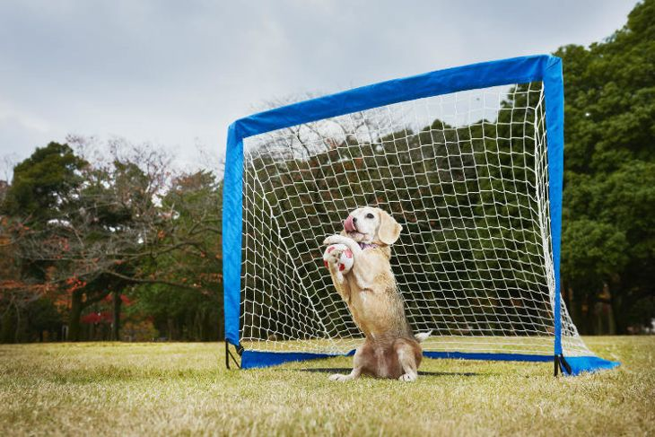 Most balls caught by a dog with the paws in one minute