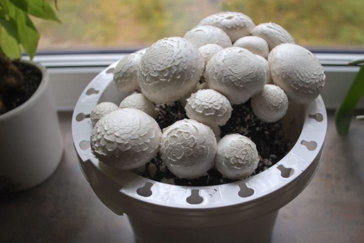 Moist soil makes mushrooms feel right at home.