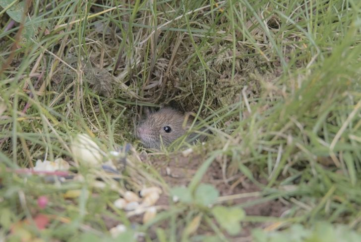 mouse hole outside home yard
