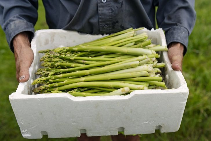 Harvest Asparagus Spring