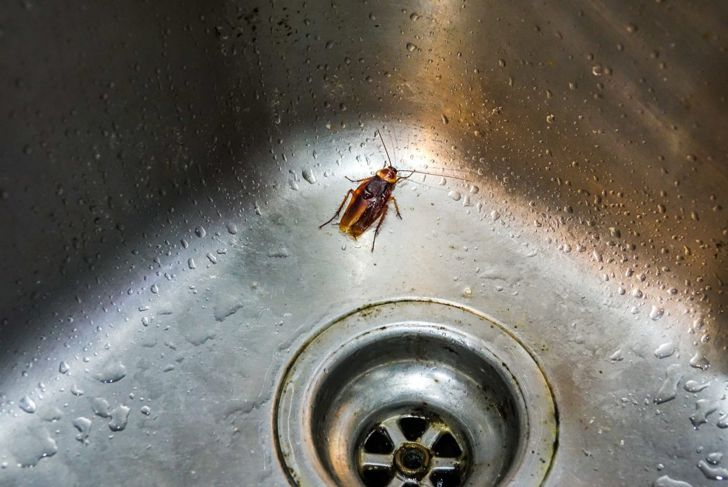 Cockroaches are attracted to water