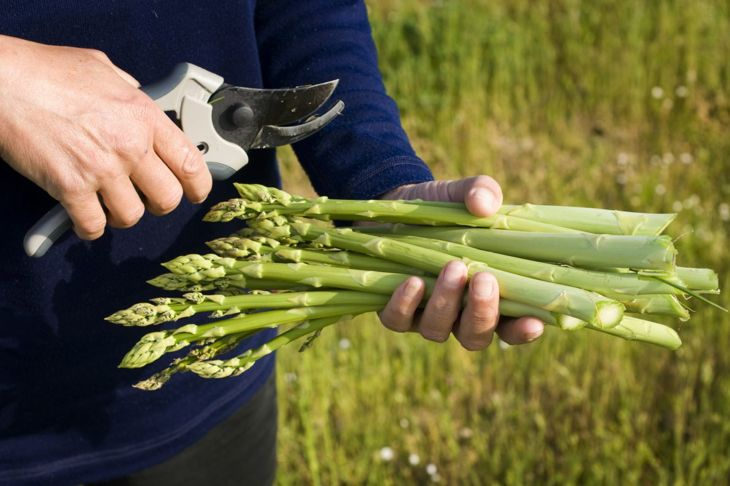 Mistakes Dos Dont's Asparagus