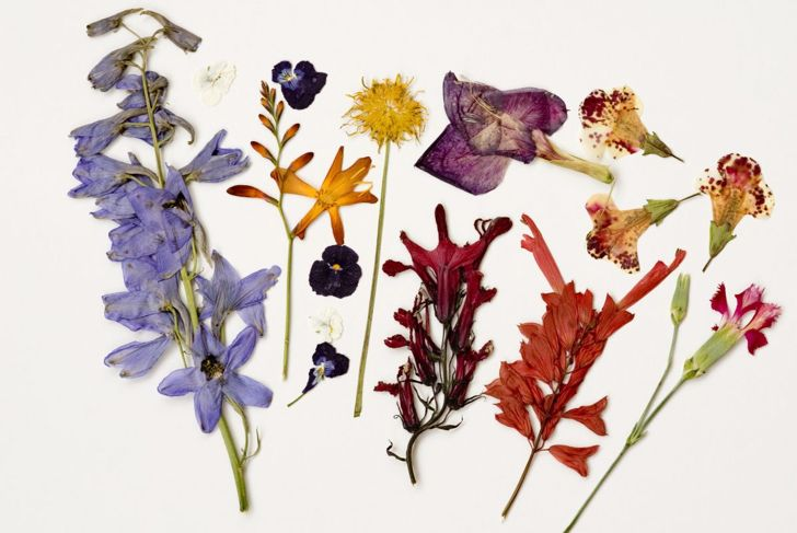 Iron Flowers Dry Preserve