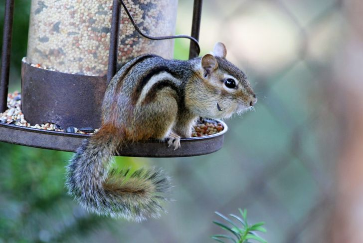Secure your bird feeder
