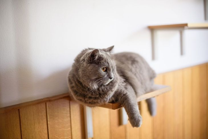 Install floating shelves for cats