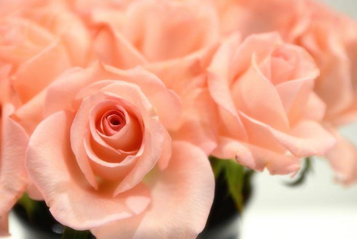peach rose vase