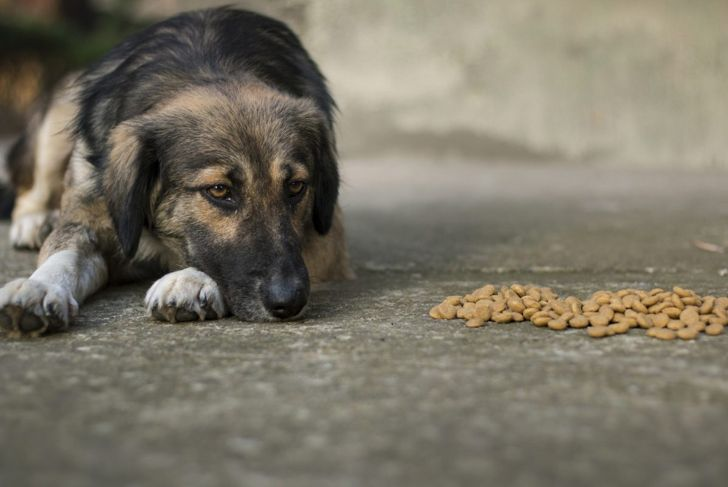 Use broth to help older pets